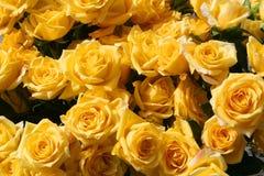 De gouden rozen van de Staking Stock Foto's