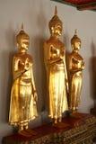 De gouden standbeelden van Boedha Stock Foto's