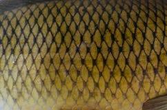De gouden textuur van vissenschalen royalty-vrije stock foto's