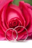 De gouden trouwringen en roze namen geïsoleerde toe Stock Afbeelding