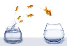 De gouden vissen van de sprong van aquarium aan aquarium stock afbeelding
