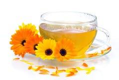 De goudsbloem van de thee stock foto