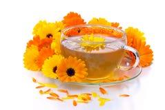 De goudsbloem van de thee royalty-vrije stock afbeeldingen