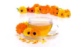 De goudsbloem van de thee royalty-vrije stock fotografie