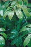 De gröna växterna Arkivfoton