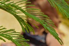 De gröna växterna av våren arkivfoto