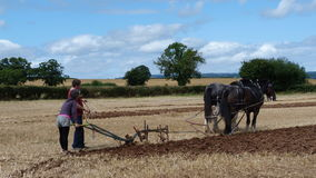 De graafschappaarden met ploeg bij een Werkdagland tonen in Engeland Stock Fotografie
