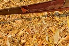 De graanschil legt onderaan de schillerriem stock afbeelding