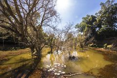 De gracht in Siem oogst Angkor Wat Preah Khan is een tempel in Angkor, Kambodja, in de 12de eeuw voor Koning Jayavarman VII wordt royalty-vrije stock foto