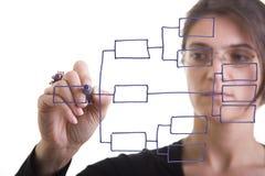 De grafiek van de organisatie Stock Afbeeldingen
