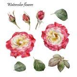 De grafische Elementen van het Ontwerp Bloemenreeks waterverf rode rozen Stock Afbeeldingen