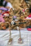 De grappige cijfers van katten naaiden van stof, op verkoop bij Slavisch F Stock Afbeeldingen