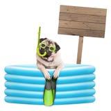 De grappige de zomerpug hond met beschermende brillen, snorkelt en vinnen in opblaasbare pool, met houten teken Stock Foto's