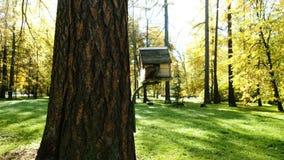 De grappige eekhoorn beklimt in de voeder op een boom voor een noot in het park stock video