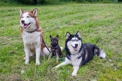 De grappige familie Royalty-vrije Stock Afbeelding