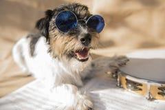 De grappige hond met glazen zingt en speelt stock foto