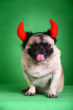De grappige hond van het Huisdier Stock Fotografie