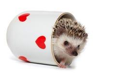 De grappige huid van egelspelen - en - zoekt Royalty-vrije Stock Foto's