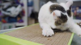 De grappige kat geniet van zijn nieuw klauw malend stuk speelgoed stock video