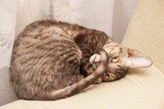 De grappige kat ligt royalty-vrije stock afbeeldingen