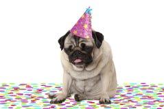 De grappige pug puppyhond die partijhoed dragen, die op confettien gaan zitten, die op champagne worden gedronken, vermoeide met  stock afbeeldingen