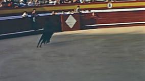 De grappige rodeo toont stock video