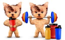 De grappige schudbeker van de hondholding met sportvoeding Stock Afbeelding