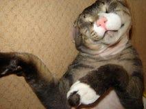 De grappige slaap die van de kattensfinx sloot zijn ogen het rusten liggen royalty-vrije stock foto