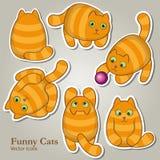 De grappige Vectorreeks van Kattenpictogrammen Royalty-vrije Stock Foto's