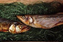 Twee vissen zijn in de doos Stock Afbeeldingen