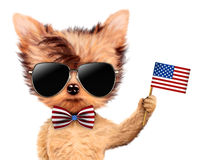 De grappige vlag van de V.S. van de hondholding Concept 4 van Juli Royalty-vrije Stock Foto's
