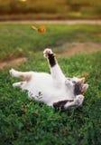 De grappige witte vette kat ligt op een de zomer zonnige weide en vangt een vliegende oranje vlinder met zijn poot op een duideli royalty-vrije stock foto