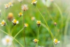 De grasbloem veroorzaakt de allergische bloemen van het symptomengras voor bac Royalty-vrije Stock Foto's