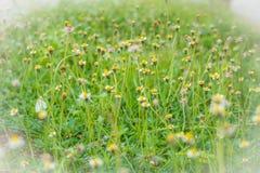 De grasbloem veroorzaakt de allergische bloemen van het symptomengras voor bac Royalty-vrije Stock Afbeeldingen