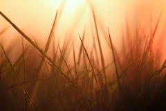 De grassen steunen licht Stock Fotografie
