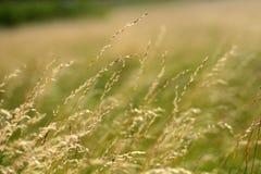 De grassen van de zomer in de wind royalty-vrije stock foto