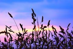 De grassen van het silhouet stock fotografie