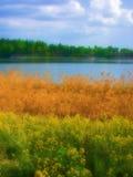 De Grassen van Wildflowers door Vijver Royalty-vrije Stock Fotografie
