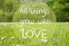 De Grasweide, Daisy Flowers, citeert Alle Dingen groeit met Liefde Stock Foto