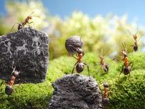 De gravures van de rots, mierenverhalen stock afbeelding