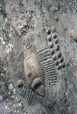 De gravures van de rots in Qatar royalty-vrije stock afbeelding