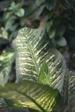 De Grean växterna i parkera royaltyfri fotografi