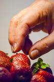 De greep rode rijpe aardbei van de vrouwenhand Stock Foto