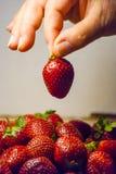 De greep rode rijpe aardbei van de vrouwenhand Stock Foto's