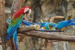 De Greep van de Macorevogel op Tak royalty-vrije stock afbeeldingen