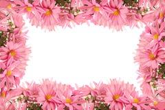 De grens of het frame van Daisy Stock Afbeelding