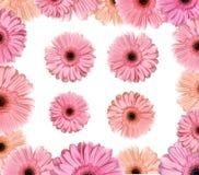De grens van de bloem Stock Foto's