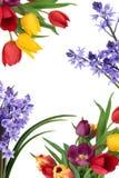 De Grens van de Bloem van de lente stock foto's