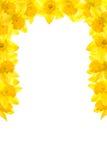De Grens van de gele narcis Royalty-vrije Stock Foto