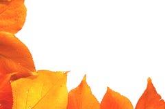 De grens van de herfst Stock Foto